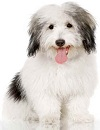 The best dog breed - small breeds