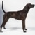Large dog breeds - Plott Hound