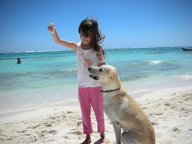 dog behavior