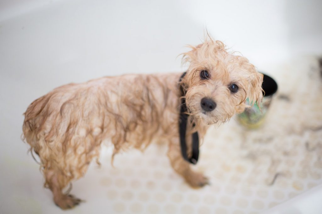 The best dog grooming tools – tried and tested!