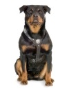 The best dog breed - dangerous breeds