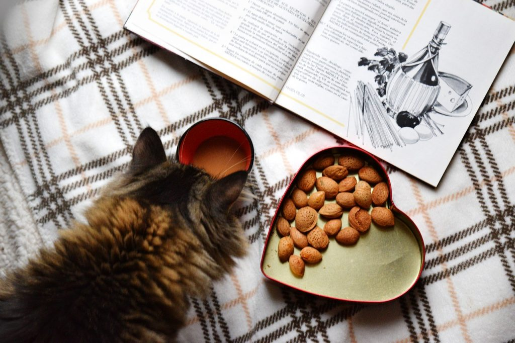 6 No-Nonsense Facts Regarding Cat Food Brands