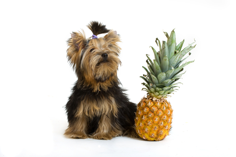 Is Pineapple Good For Dogs To Eat