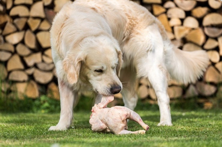 Is It Bad For Dogs To Eat Raw Chicken
