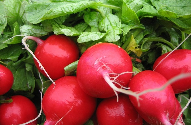 Can Rabbits Eat Radishes?