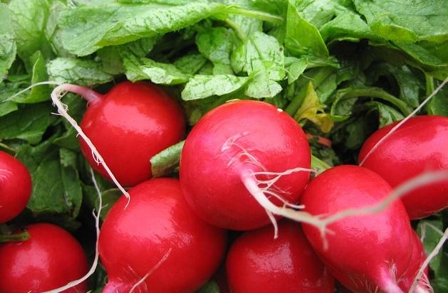 can rabbits eat radishes