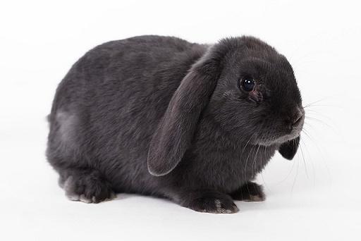 how do rabbits communicate