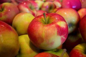can rats eat apples