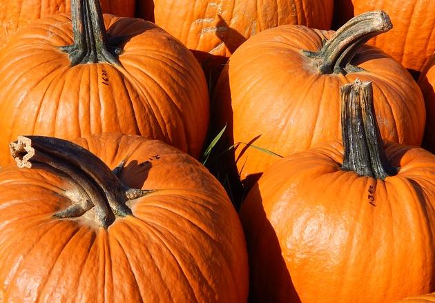 can chickens eat pumpkin
