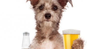 can dogs drink beer