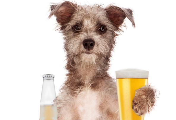 Can Dogs Drink Beer? Is Beer Bad For Dogs?
