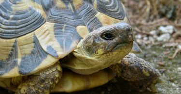 how long can turtles live