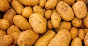 can guinea pigs eat potatoes