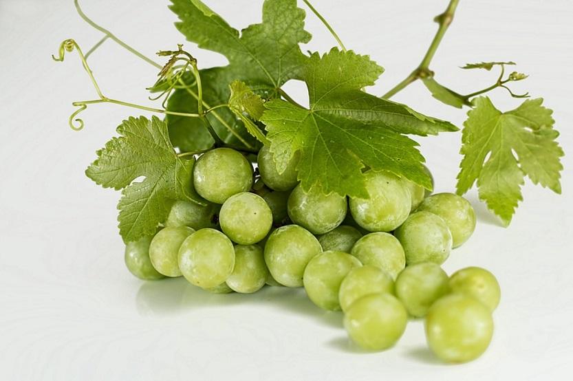 can horses eat grapes