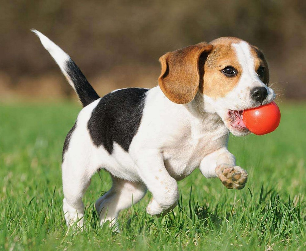 Is Rabbit Food Bad For Dogs