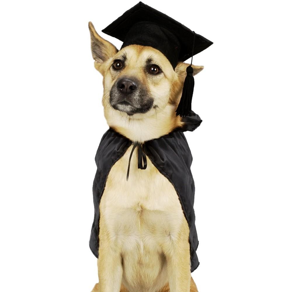 Hiring a Dog Trainer