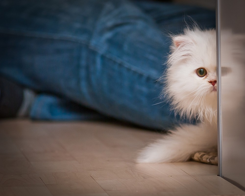 How to Have a Stress Free Home For Your Pet