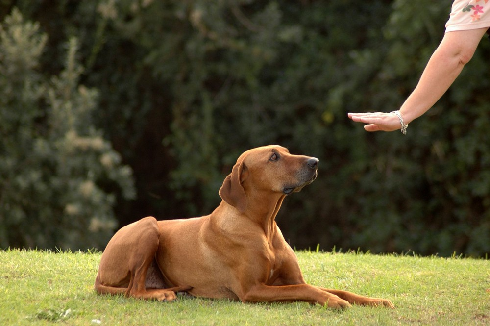 First Steps In Dog Training