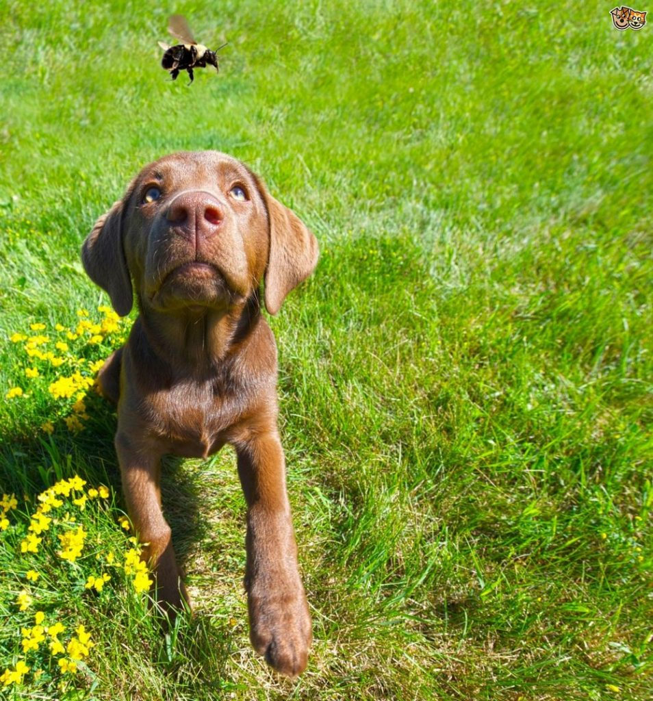 How To Treat Bee Stings On Pets