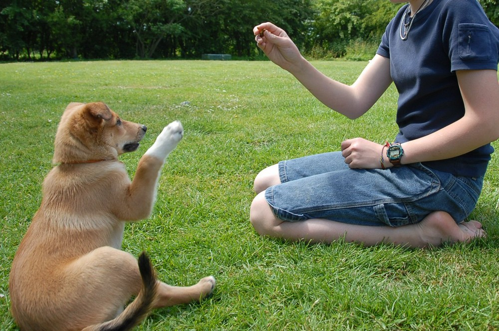 How To Use Treats In Training