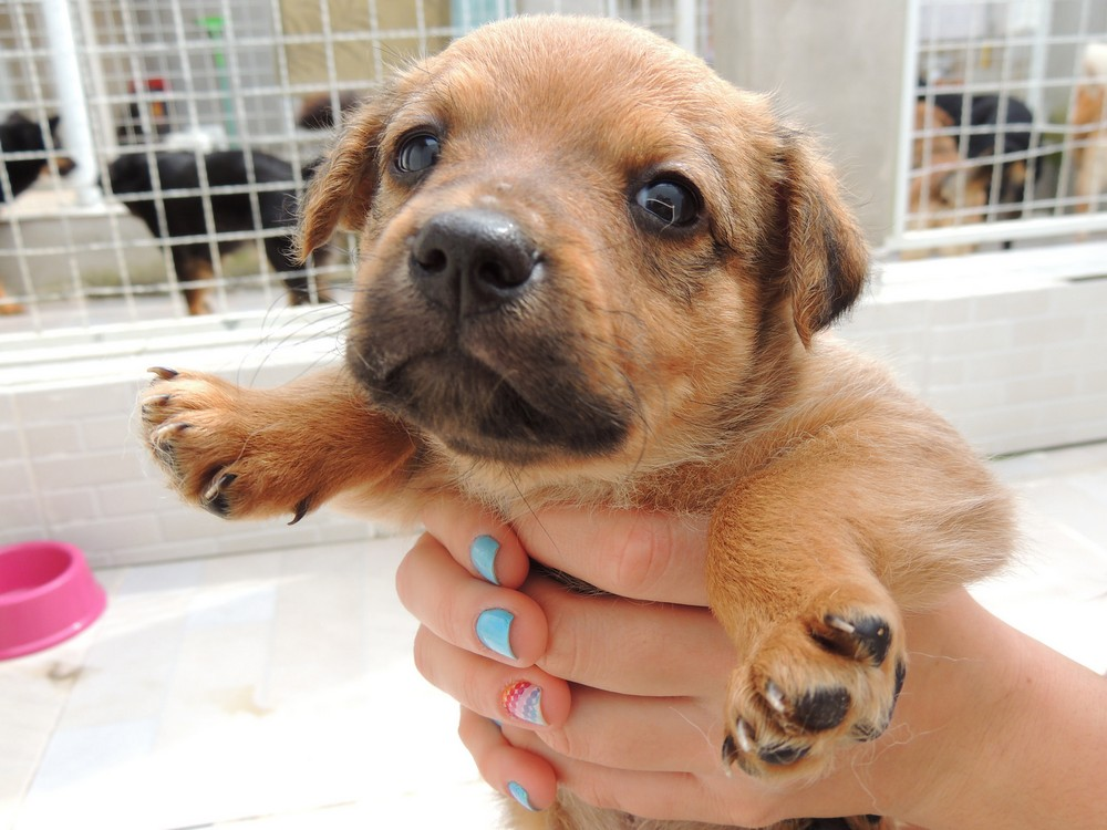 Things to Consider Before Adopting a Pet