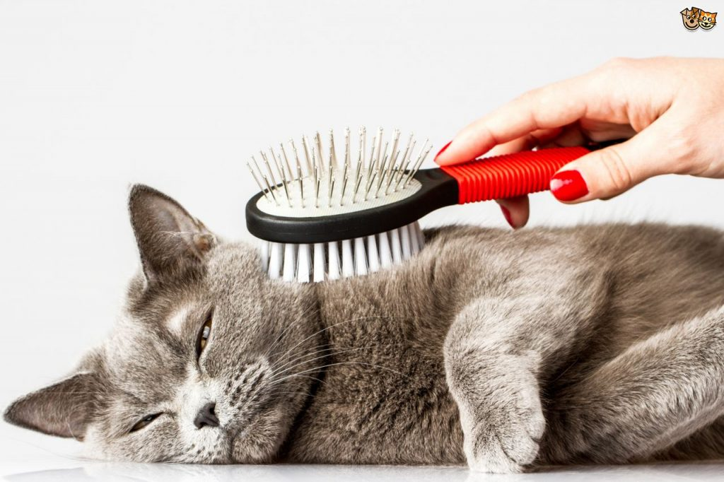 Five Ideas On How To Deal With Shedding