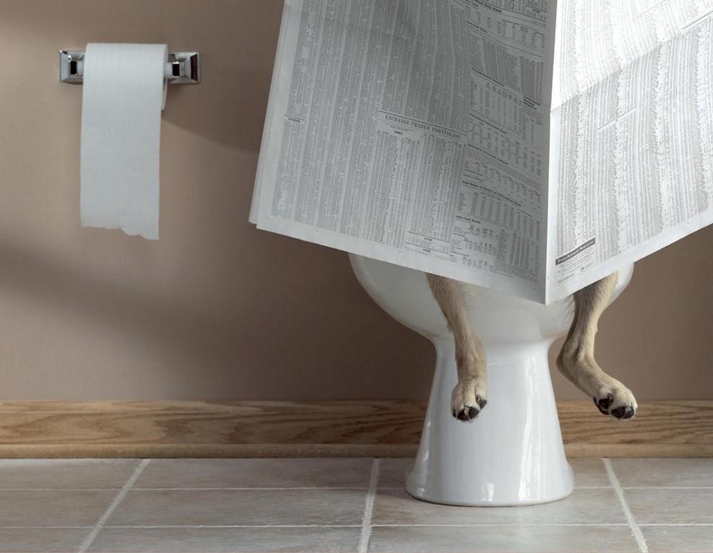 Diarrhea in Dogs