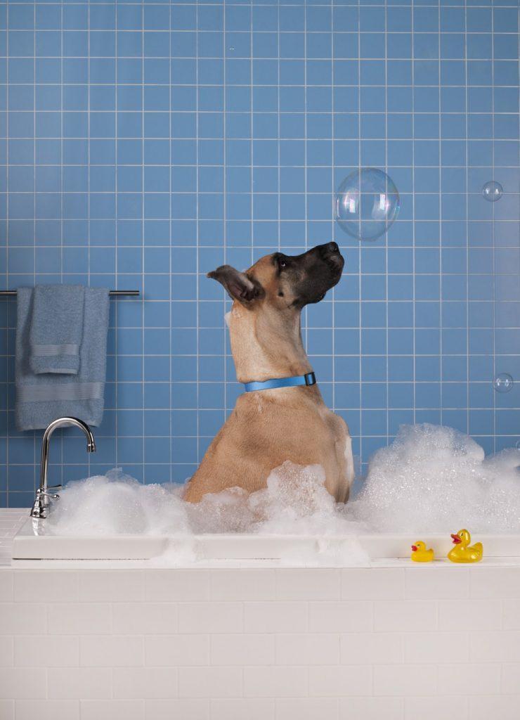 Dog Washing Guide