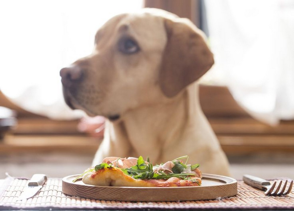 Eight Foods That You Shouldn't Feed Your Pet