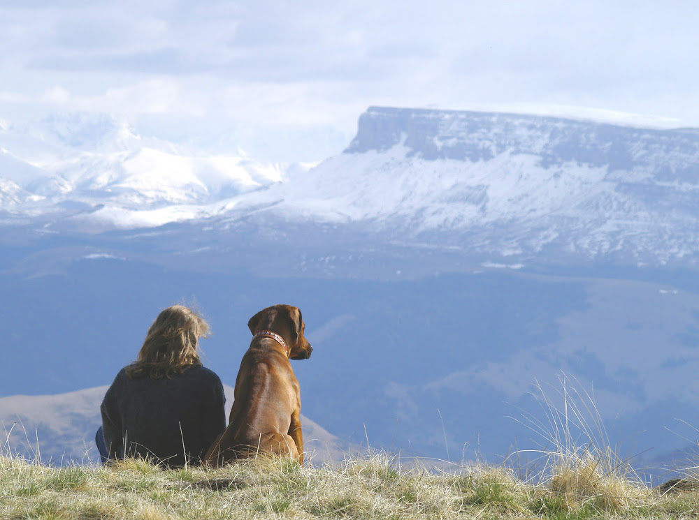 Hiking With Your Dog – Make Sure Your Dog Is Just As Prepared As You