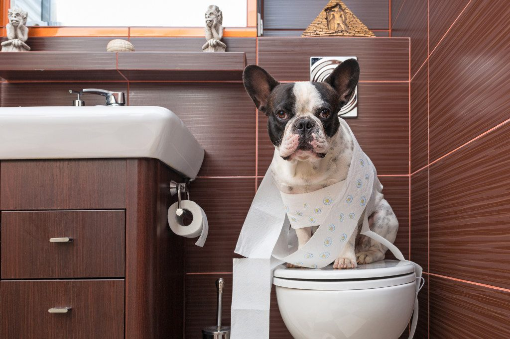 The simplest obedience training for dogs at home