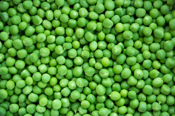 can dogs eat fresh peas