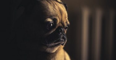 can dogs cry