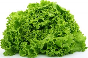 can rabbits eat lettuce