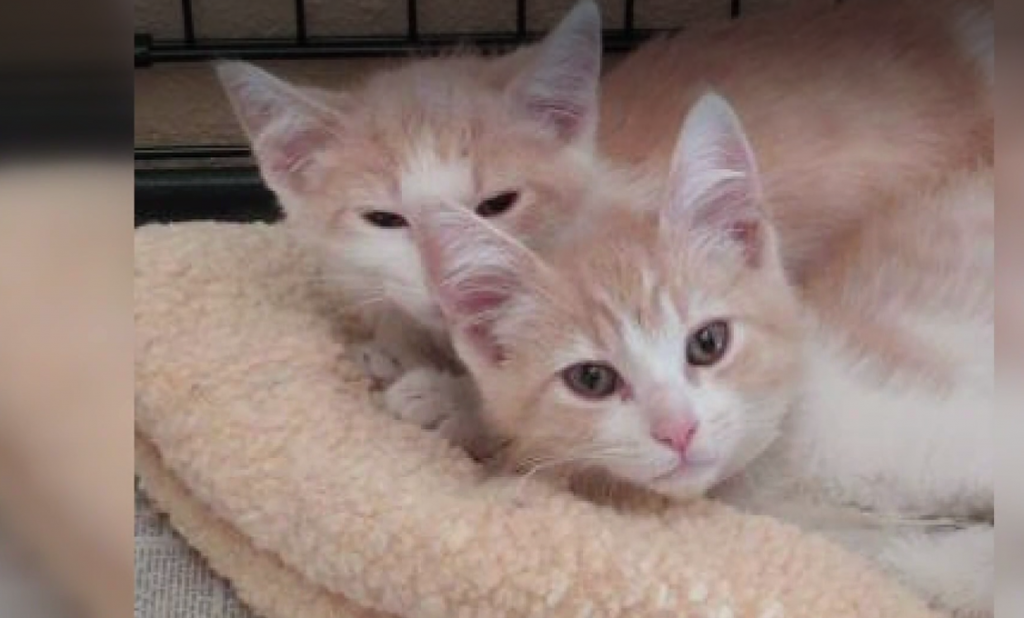 Brothers Ozzy and Butter Reunited through Couple's Romance