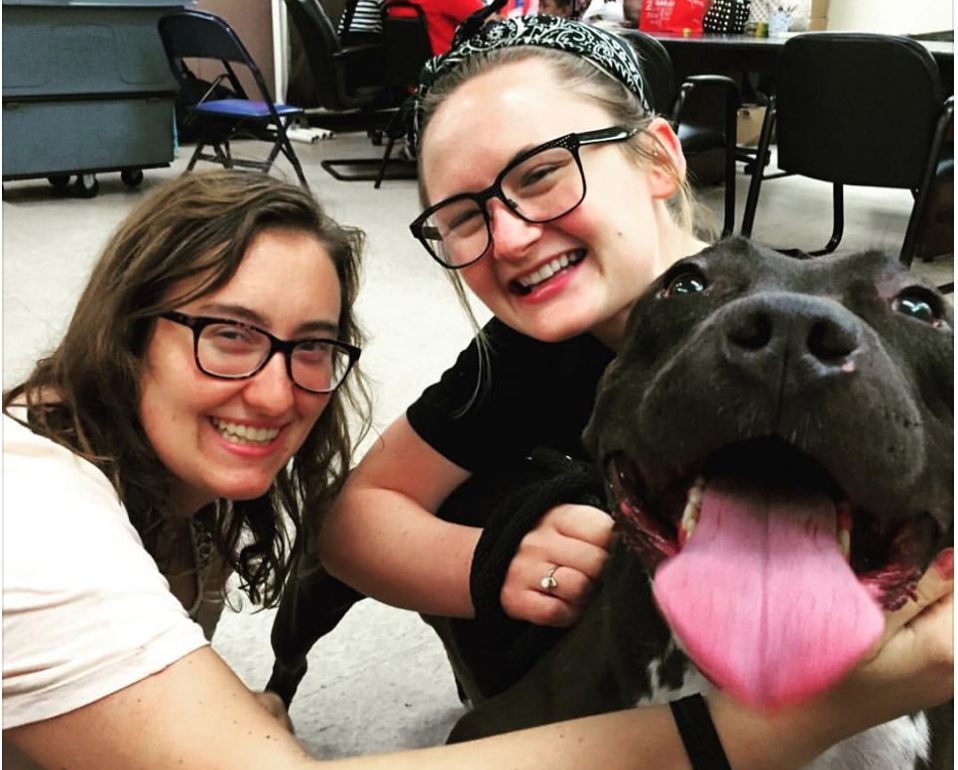 Clear The Shelters Event Finds A Home For Over 45,000 Pets