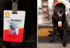 Dog Abandoned at a Gas Station is Now Their Employee