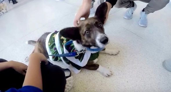 """Dog Considered """"Too Crazy"""" Is Now a Therapy Dog"""