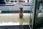 Dog Kept Waiting For Flight Attendant And Got Adopted By Her