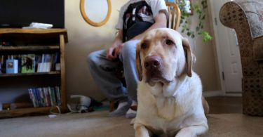 Dog Saves His Human's Life by Getting Help