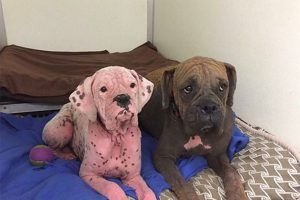 Dog With Pink Skin Rescued