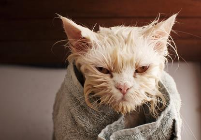 Guide to Bathing Your Cat