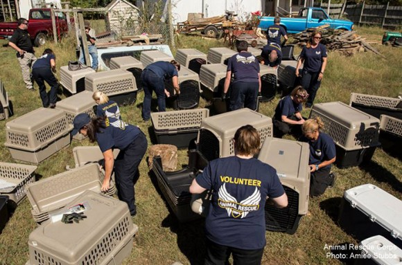 68 Cats Saved in Tennessee