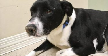 Dog Shot in the Head Survives and Seeks Family