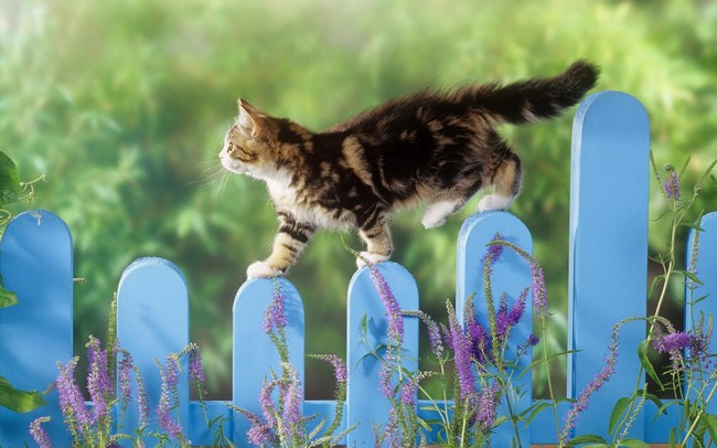 How to Keep Your Cat Safe in Spring