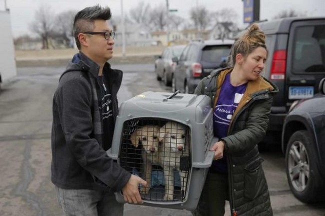 Hundreds of Dogs Saved From South Korean Slaughter House