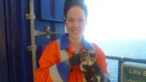 Kitten Found on Offshore Oil Rig and Gets First-Class Treatment