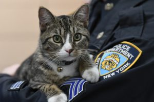 NYPD Has a New Cat Officer