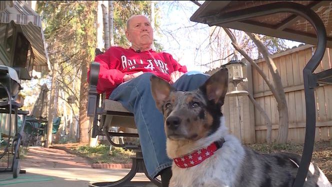 Puppy Saves Her Owner from a Stroke