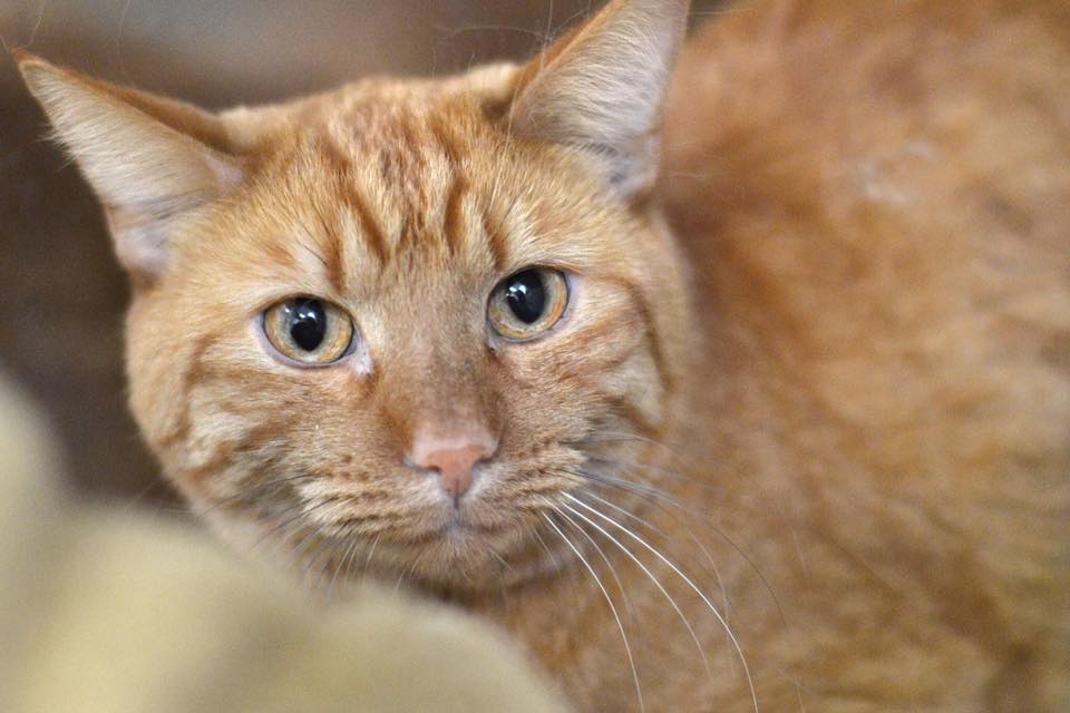 Cat Rescued From Giant Hole after a Year